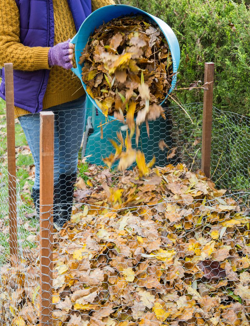 Fall 2021 Landscaping, Fall prep, composting
